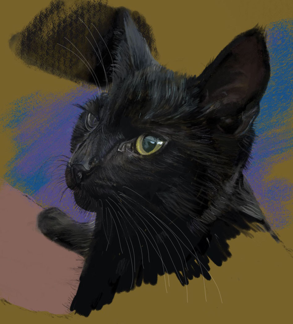 Digital Illustration pet cat